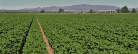 2016 cotton crop New Mexico