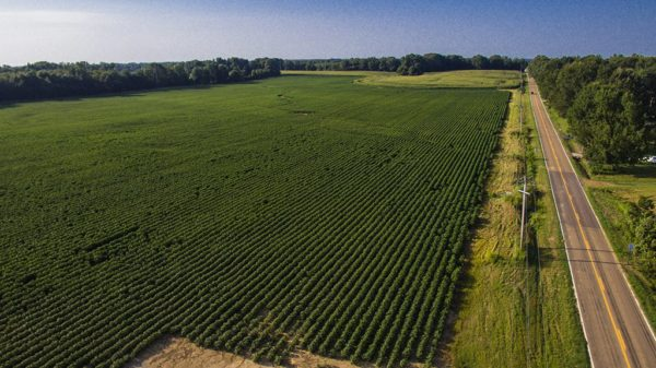 cotton field from drone