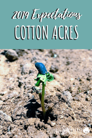 2019 cotton acres planted