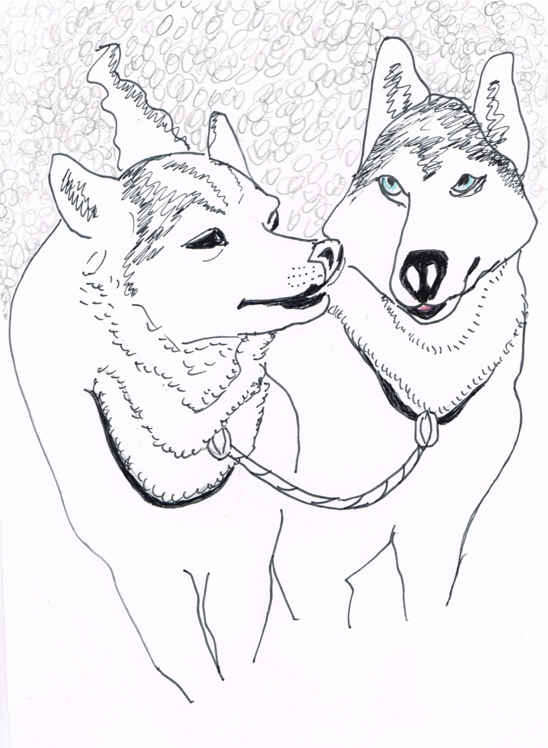 Sled Dogs Drawing
