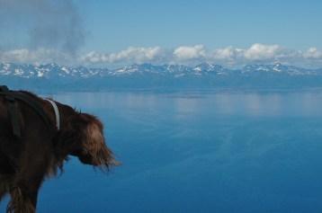 Tura longing for Lofoten, Norway