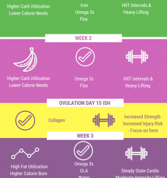 menstrual cycle stages graphic [ 800 x 2000 Pixel ]