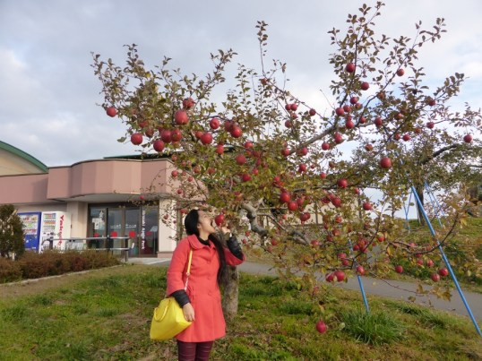 Hirosaki Apple Park