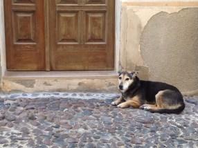 HL_Alghero_dog
