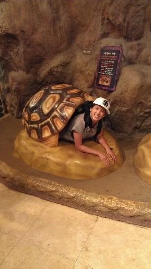 """""""I Like Turtles"""""""