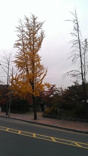 I <3 Fall in Korea