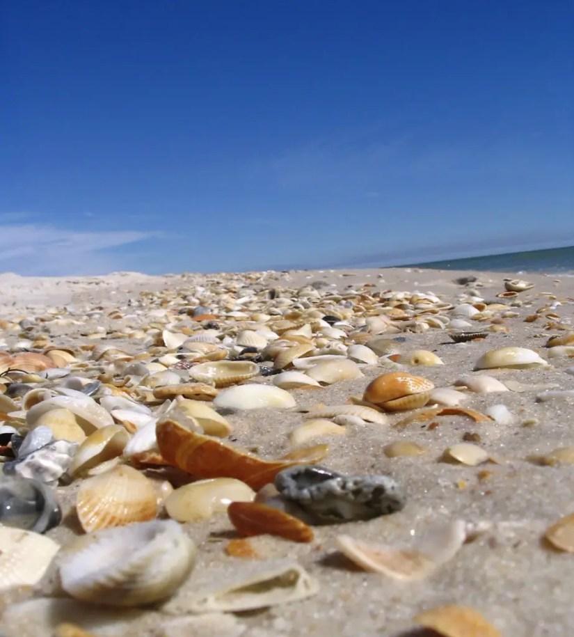 Shells on St. George Island