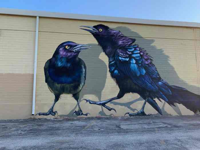 Crow Mural In San Antonio