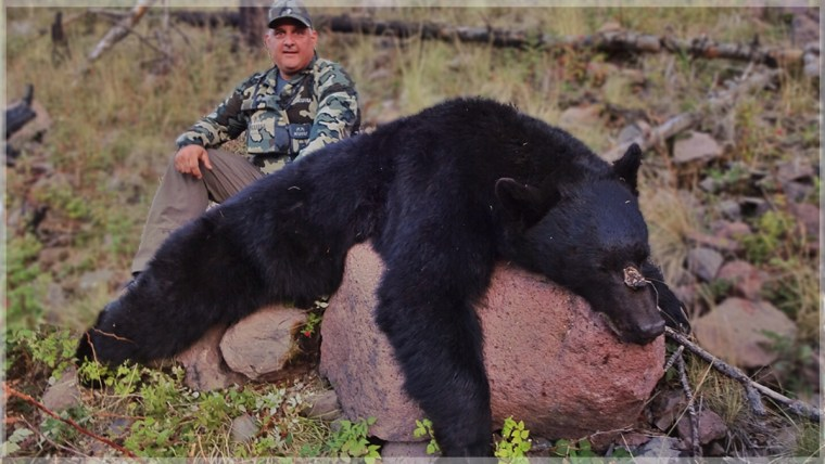 Arizona statewide commissioners black bear 2019