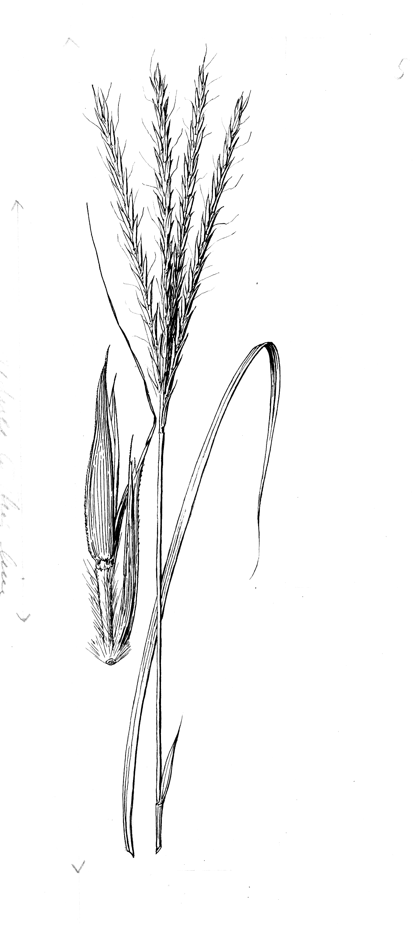 Catalogue of the Botanical Art Collection at the Hunt