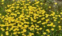 DSC_0323 goldfields cropped