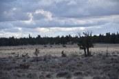 dsc_04461-wild-horses-in-x2