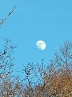 Moon Over Still Meadow