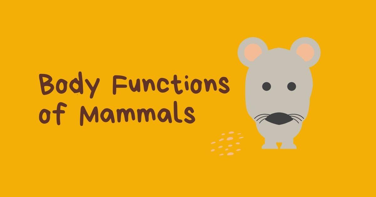 HuntersWoods PH | Body Functions of Mammals | Montessori | Biology | Vertebrates