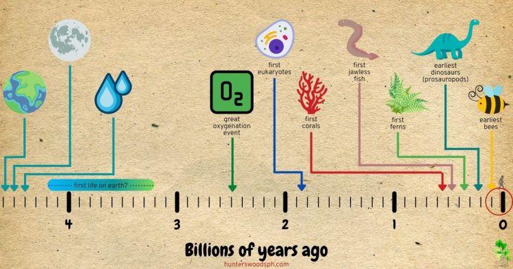 HuntersWoodsPH Montessori History Timeline of Life Billions of Years Ago