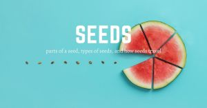 HuntersWoodsPH Parts of a Seed, Types of Seeds, and How Seeds Travel