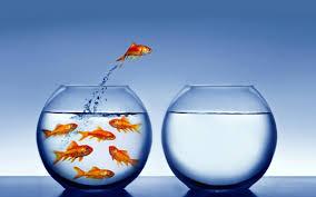 goldfish leap