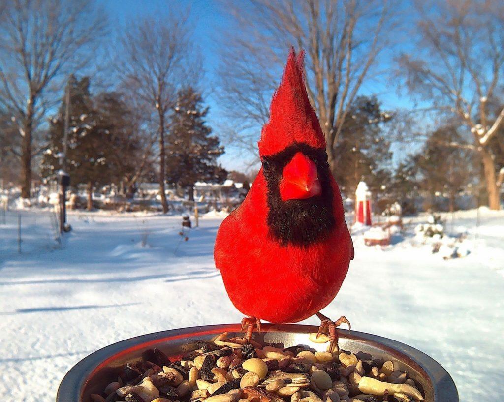 Cardinal ...