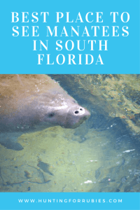 Best Place to See Manatees in South Florida