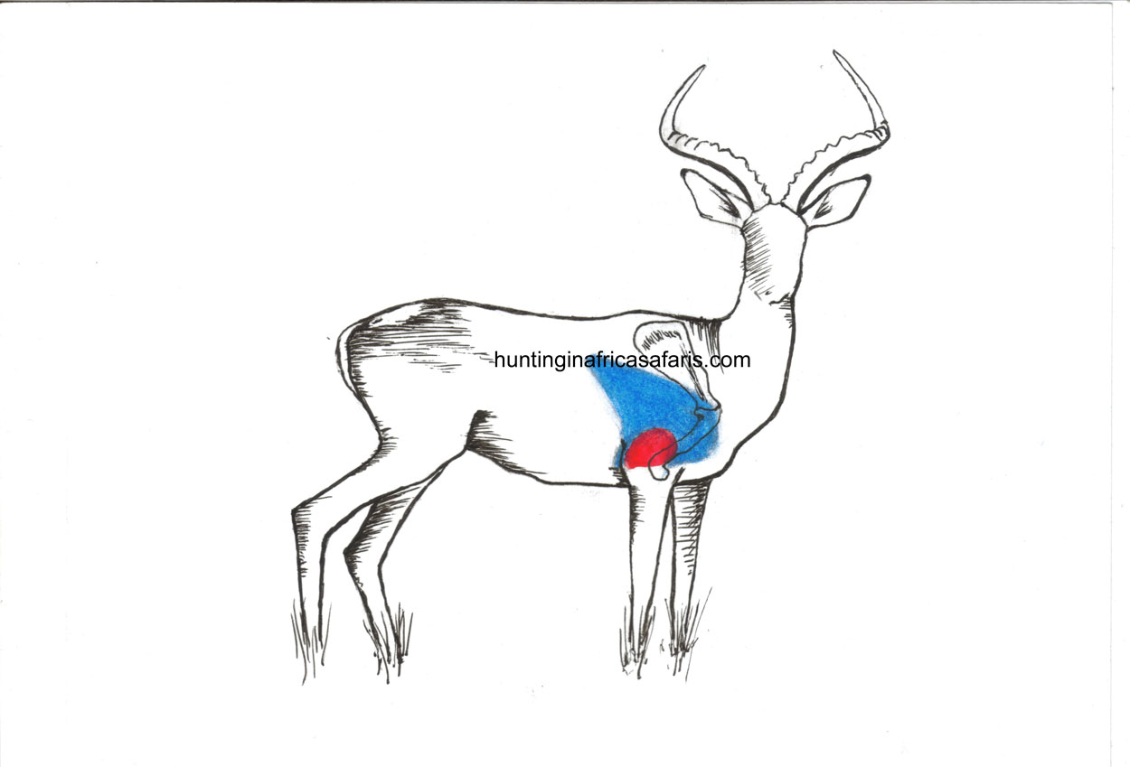 Bow Hunting Impala Shot Placement Diagram South Africa