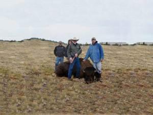 Western Buffalo Hunting - Hunting in Florida