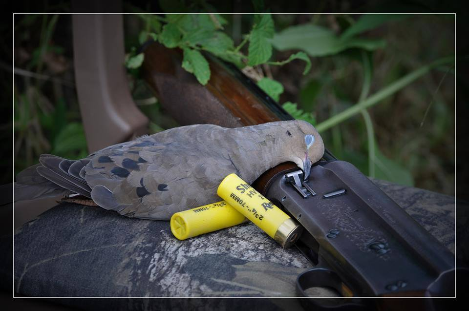 The HuntingLife Guide to Dove Hunting