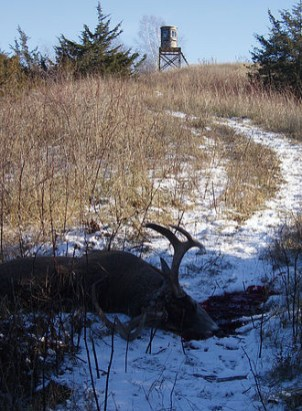 Antlers, Prized Rack, Bow Hunt, Gun Shooters Prize Target, Snowy Deer Hunt, Bare Foot Comfort, Midwest Outdoor Ridge, Muddy Blind Hunt, Rack