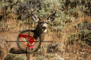 Where to aim on a deer to ensure a fatal shot