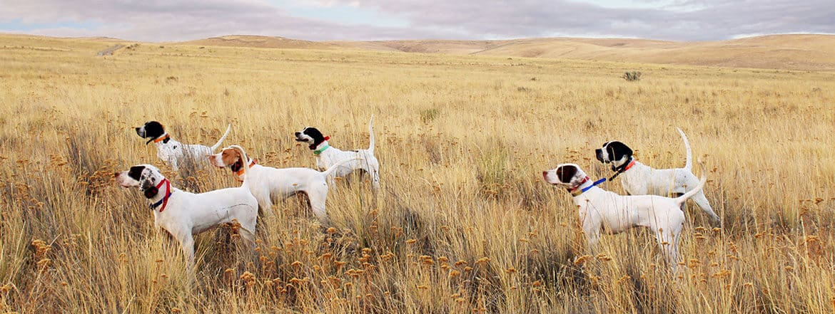 hunting dogs img 01