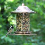 More Birds 106IN X-4 Squirrel-Proof Bird Feeder