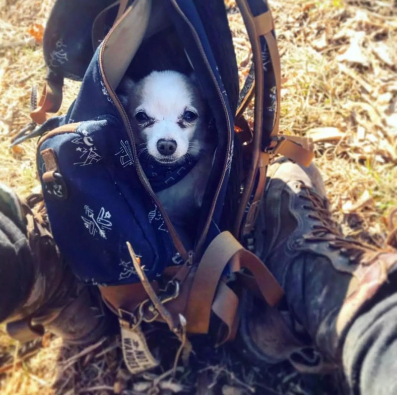 Melissa Millers Dog in her Kelty Pack