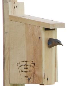bluebird.GoetzCROP