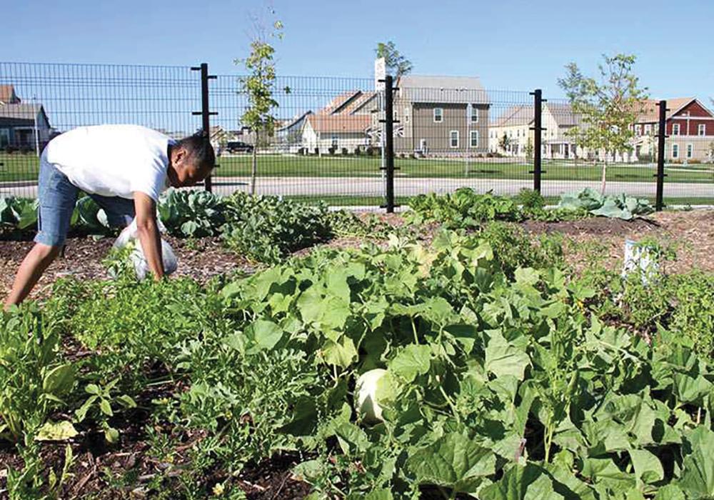 Westlawn-Gardens-community-garden