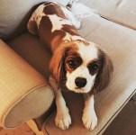 My pup, Brady