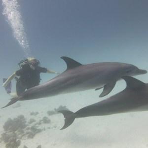 Sunbathing diving in Hurghada