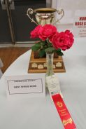 Rose Show | Best Shrub Rose | Winnipeg Parks | Dale Lovering