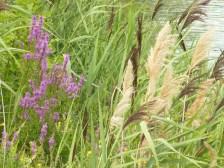 Report an Invasive Species