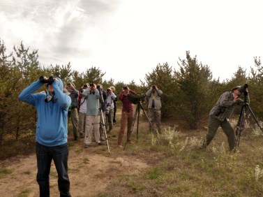 Keeping an eye on the sky for a Kirtland's Warbler!