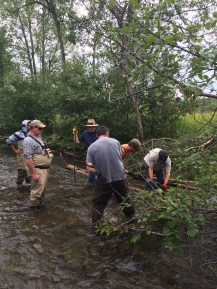 Volunteers secure whole trees to priority stretches of river to improve habitat diversity.