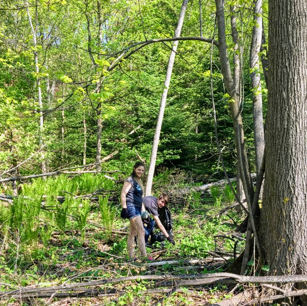 students pulling garlic mustard in the woods