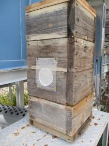 養蜂ってできるんですね!やってみたいリスト入りです