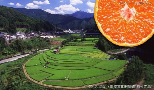 和歌山県有田川町 ふるさと納税
