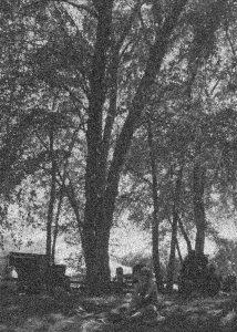 Mr Fox Little Kaninchen Tree