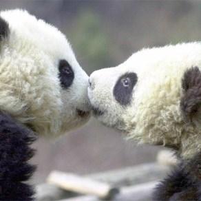 sweetest_animal_kiss (8)