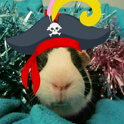 Captain Buddlington