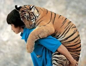 Как-определить-характер-человека-по-его-отношению-к-животным-2