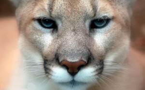 Пума-Puma-история-великого-спортивного-бренда-с-чего-все-начиналось-1