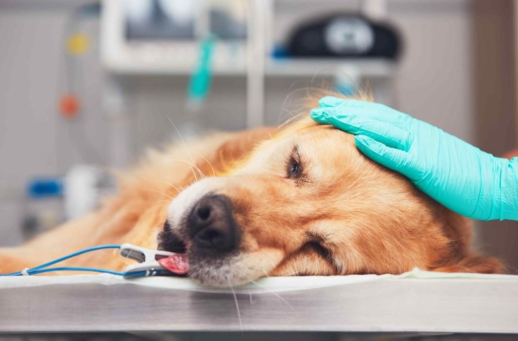 Como proceder em caso de Emergência com o seu Animal?