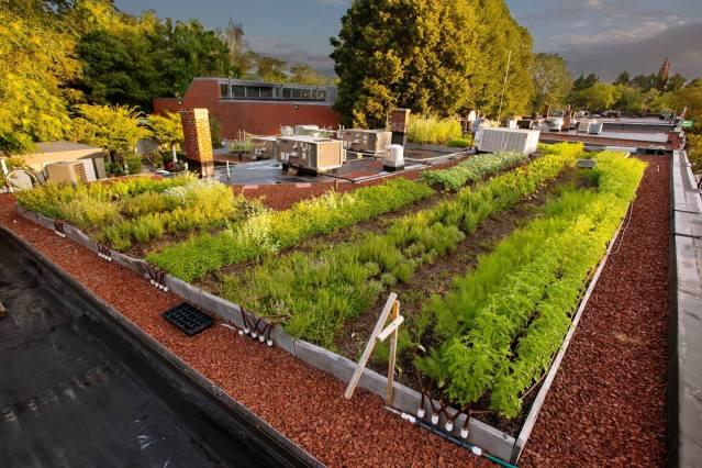 Ester Restaurant - Extensive Intensive Green Roof - Highview Creations