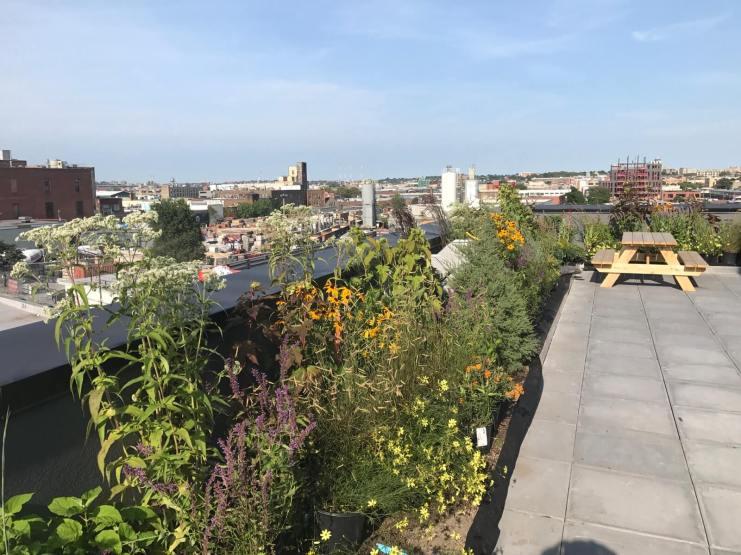 246 Johnson - Green Roof Design in Brooklyn - Highview Creations